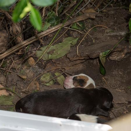 Mama&Puppies03