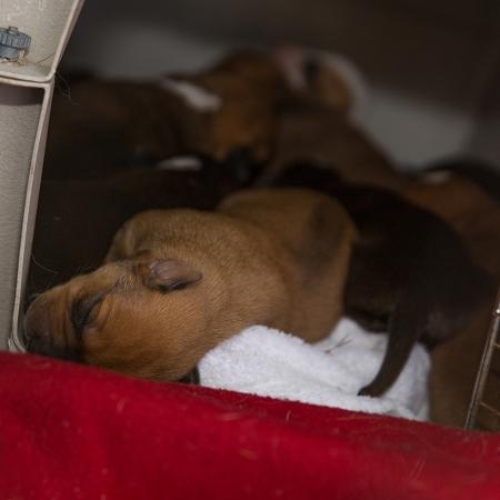 Mama&Puppies19